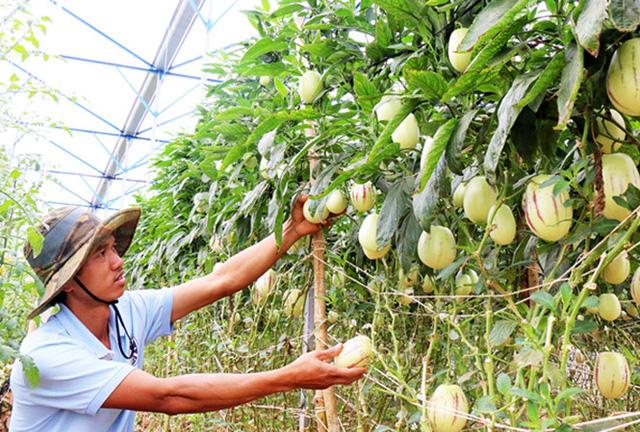 Anh Định thu tiền tỷ mỗi năm nhờ vào phương pháp trồng rau thẳng