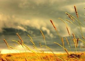 Nằm mơ thấy cơn gió