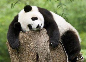 Mơ gấu đánh bao nhiêu trong xo so mien bac