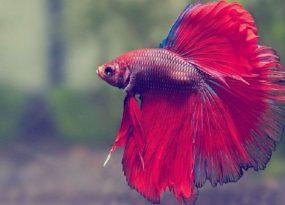 Nằm mơ thấy cá điềm báo gì?