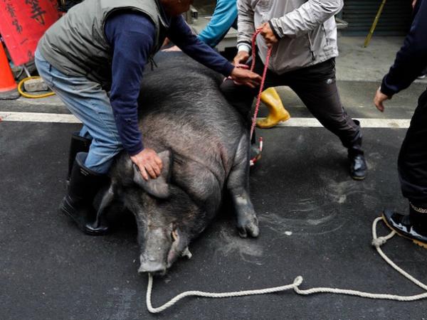 Nằm mơ thấy giết lợn nên chơi xổ số con gì may mắn