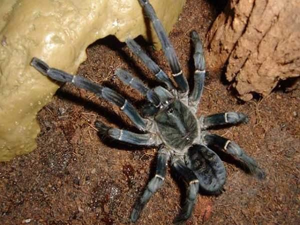 Nằm mơ thấy nhện đánh con gì?