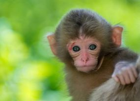 Mơ thấy khỉ nên đánh con gì? Mộng thấy khỉ tốt hay xấu